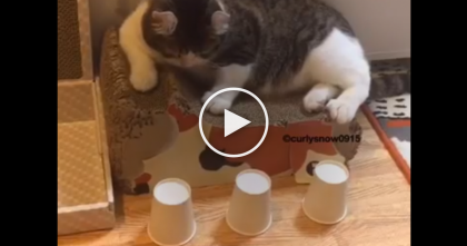 This Human Proves No Match For This Witty Kitty… Watch To See What This Kitty Can Do!!