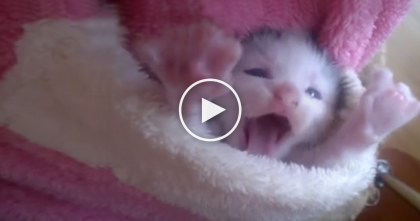 This Pocket Has The Cutest Little Surprise Your Heart Will Ever Handle… Oh My Goodness, TOO CUTE