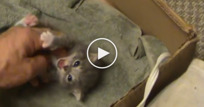 Tiny Orphaned Kitten Crying For Help In Abandoned Barn, But When Humans Found Him…
