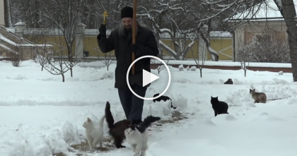 WATCH What These Cats Do When This Man Walks Around The Monastery Every Day… SOO Cute!!