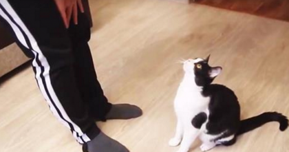 Adorable Cats Sit In Front Of Owner, But Then… The Surprise Is Just TOO Cute To Handle!