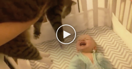 When This Baby Notices The Cat For The First Time, Just Watch The Reaction…