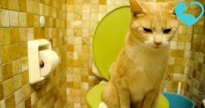 Cat Goes To The Bathroom, But Keep Watching What Happens Right After… I Can't Believe This Cat!