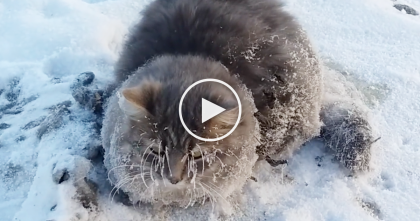 "He Noticed A Cat Frozen To The Ground, But Then Moments Later… ""The Saddest Sight I've Ever Seen!"""