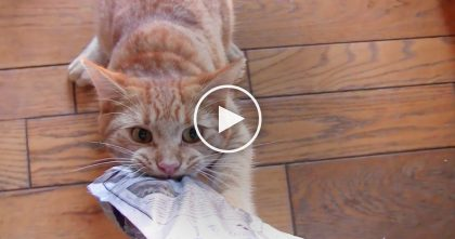 Kitten Discovers Bag Of Treats, But When His Owner Tries To Take It Back… Just Watch, IMPOSSIBLE!