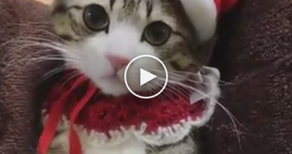 "Kitten Wishing Everyone A ""Meowy Christmas"" In The CUTEST Outfit Ever Will Make Your Day…Watch!"