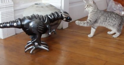 They Got A Robot Toy For Their Cat. At First It Wasn't Good, But Towards The End… Just Watch