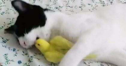 Cat Discovers Canary Bird, But The Reaction You See next… NOBODY Expected This To Happen!
