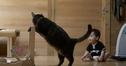 Cat Starts Using A Walker, But When The Baby Noticed… Just Watch What He Does… AMAZING!