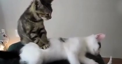Cats Are The BEST At Making New Year's Resolutions, But Just Watch… This Is Hilarious, Hahaha!