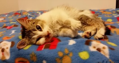 He Found A Kitten Frozen To A Blanket, Motionless, Thought To Be Dead…But Moments Later? Watch!
