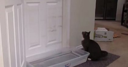 He Put A Tub Of Water In Front Of The Door… Now WATCH What The Cat Does, I'm Blown Away!!
