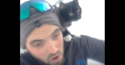 He Put His Cat On His Shoulders, But Watch What He Does Next… Oh My Goodness, Hahaha!!