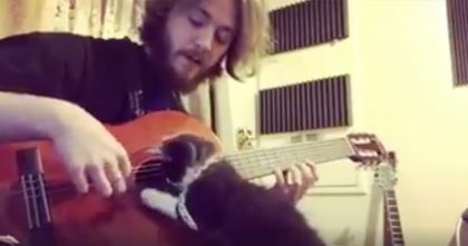He's Trying To Play The Guitar, But When The Cat Hears The Noise? Just Watch His Reaction, OMG