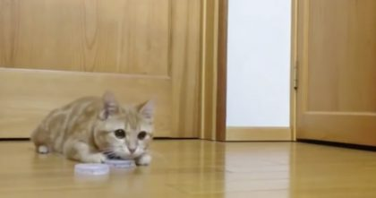 Human Tries To Throw Something Past The Cat, But It's NO Match For These Paws… OMG, Watch!!