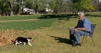 Jay Leno Proves Cats Are Smarter Than Dogs With This Hilarious Video… I CAN'T Stop Laughing!!