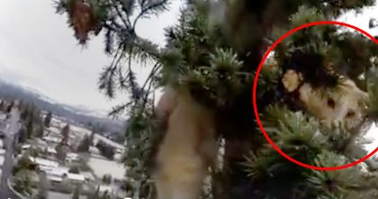 Kitty Stuck In Tree For 72 Hours, But When You See How Tall?? OMG… How Did This Happen?