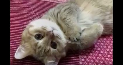 Little Baby Kitty Just Wants To Melt Your Heart With His Tiny Paws…Must Watch, ADORABLE.