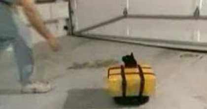Man Comes Up With GENIUS Robot Chair For Kitty Who Can't Walk… The Results Are BRILLIANT.