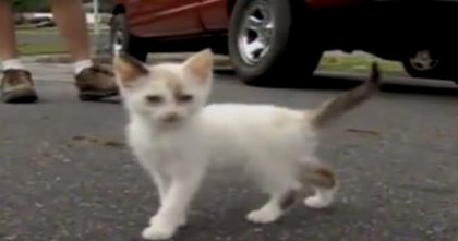 Man Throws Sack Of Kittens Out Of Car Window… Rescuer Is Appalled At What She Finds!