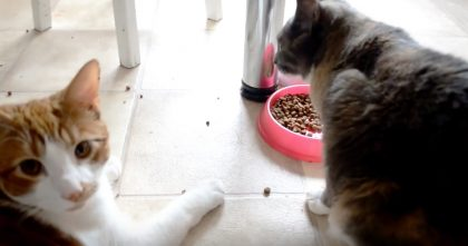 She Caught Her Cat Stealing Food From His Brother, But When You See His Face?? Hahahaha, LOL!!