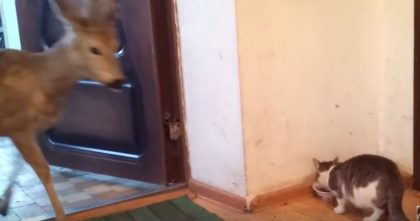 They Left The Door Open While The Cat Was Eating, But Then… Just Watch Who Comes In, OMG!