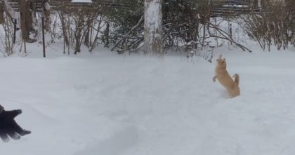 They Let Their Cat Outside To Play In The Snow, But They Didn't Expect This Reaction… Hahahaha!!