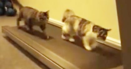 They Turned On The Treadmill, But When The Cats Notice?? Just Watch Their Reactions, LOL!!