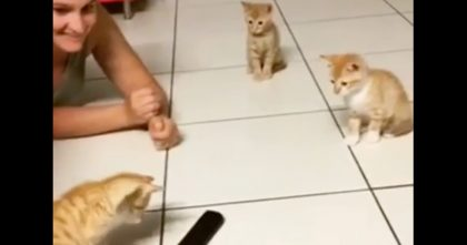 "Three Baby Kittens Discover A ""Scary Remote"" But How They Respond Is Just TOO Much… LOL!!"