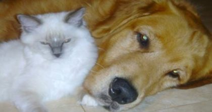 Watch Incredible Moment When Dog Helps Cat Give Birth… This Brings Tears To My Eyes, AMAZING.