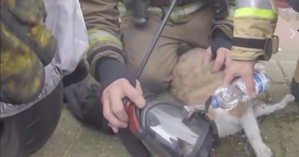 Cat From Burning Building Couldn't Take A Breath, But Then A Miracle Happens… Keep Watching Till The End!!