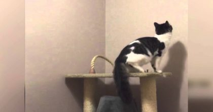 Cat Gets Ready To Jump Up The Wall, But When The Camera Zooms In… Just Watch Him, Oh My Goodness!!!