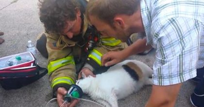Live Footage Shows Firefighters Reviving Cat Who Is Gasping For Air After House Fire Almost Took Her Life