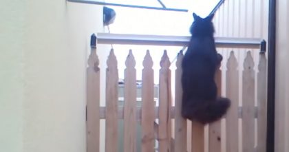 Cats Kept Jumping Over The Fence, So They Came Up With The Smartest Idea Ever… This Is GENIUS.