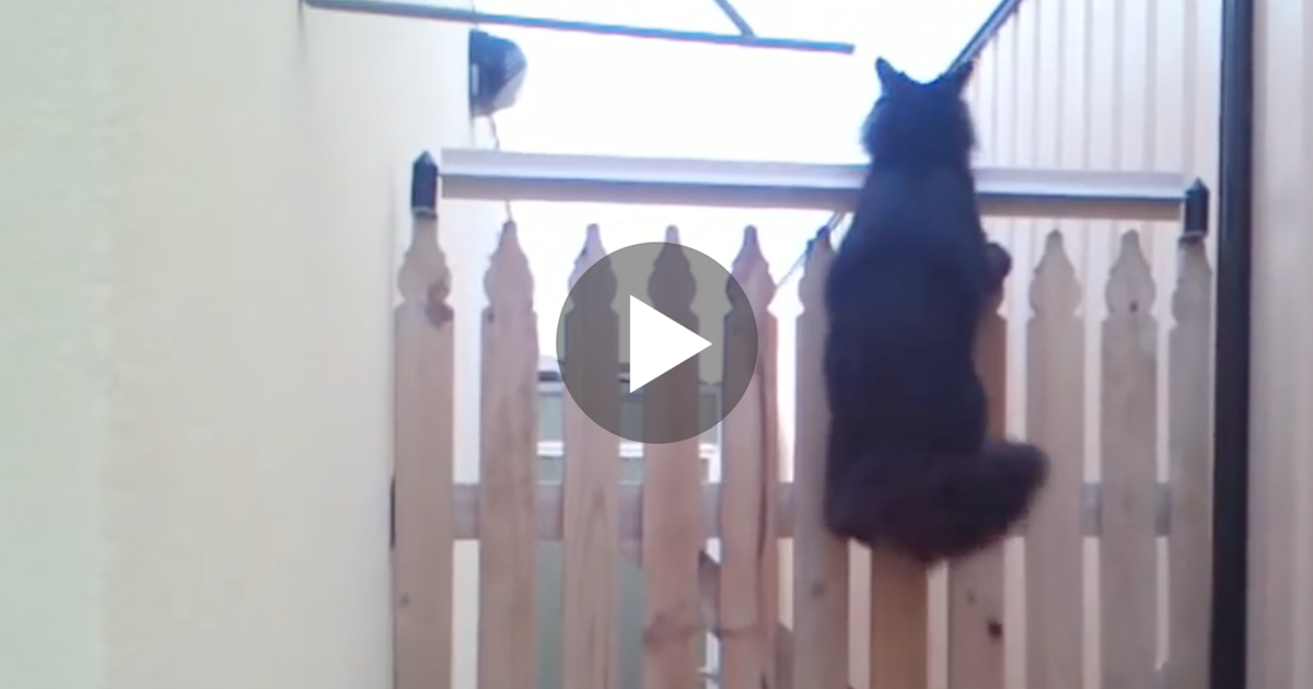 How To Stop Cat Going Over Fence