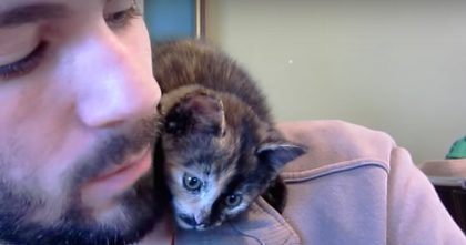 Cutest Little Kitten Refused To Be Alone, So Just Watch He Does With His Owner!
