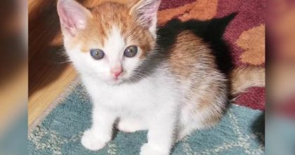 Heartbreaking Note Found Inside Abandoned Box With Tiny Kitten Inside… This Story Brought Me To Tears.
