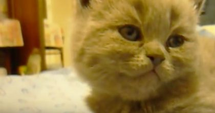 Kitten Gets Tired, But Keep Watching… This Is The CUTEST And Most Adorable Moment Ever!!