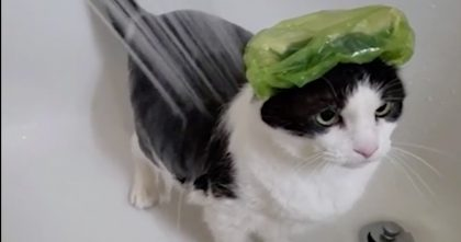 Owners Get VERY Unexpected Reaction When They Give This Cat A Shower… LOL, Just Watch!!