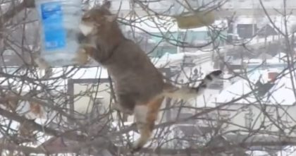 "She Puts Food In The Bird Feeder, But Then Looks Out The Window… OMG, ""That's Not A Bird!"""