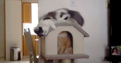 They Bought New House For The Cat, But Watch What Happens When He Discovers It… LOL!!