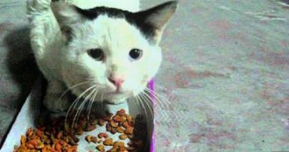 He's Feeding This Hungry Street Cat Some Food, Now Listen To How The Cat Responds… WATCH