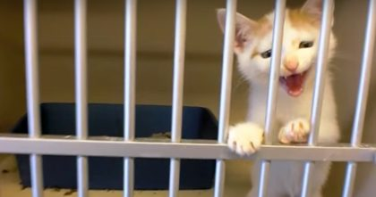 Watch This Tiny Kitten Demand To Be Adopted At Shelter… The End To This Story Is AMAZING.