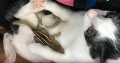 Baby Squirrels abandoned and left to die in hurricane – but now watch what this cat does