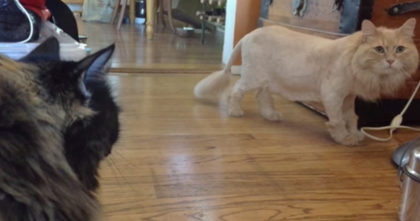Cat gets a new haircut – now watch when his sister walks out and notices… Oh my GOODNESS!!