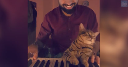 Cat Has The CUTEST Reaction When His Owner Starts Playing His Favorite Song On The Piano