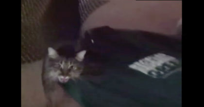 Women records her cat's reaction when she comes home – This is proof that cats miss their owners!