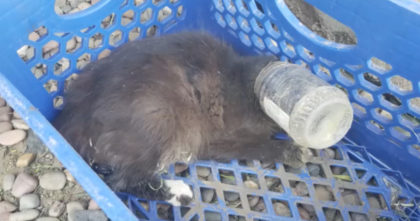 Cat with bottle trapped on her head gives rescuers an AMAZING surprise after being saved!