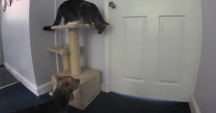 Doggie begs to go outside, but now watch what the cat does for him next… This is hilarious!!