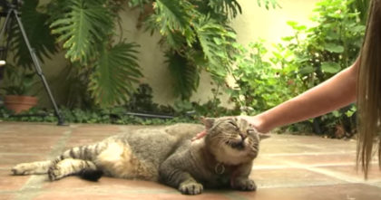 Elderly Disabled Cat Face-To-Face With Death, But Then A MIRACLE Happens… It Brought Me To Tears!